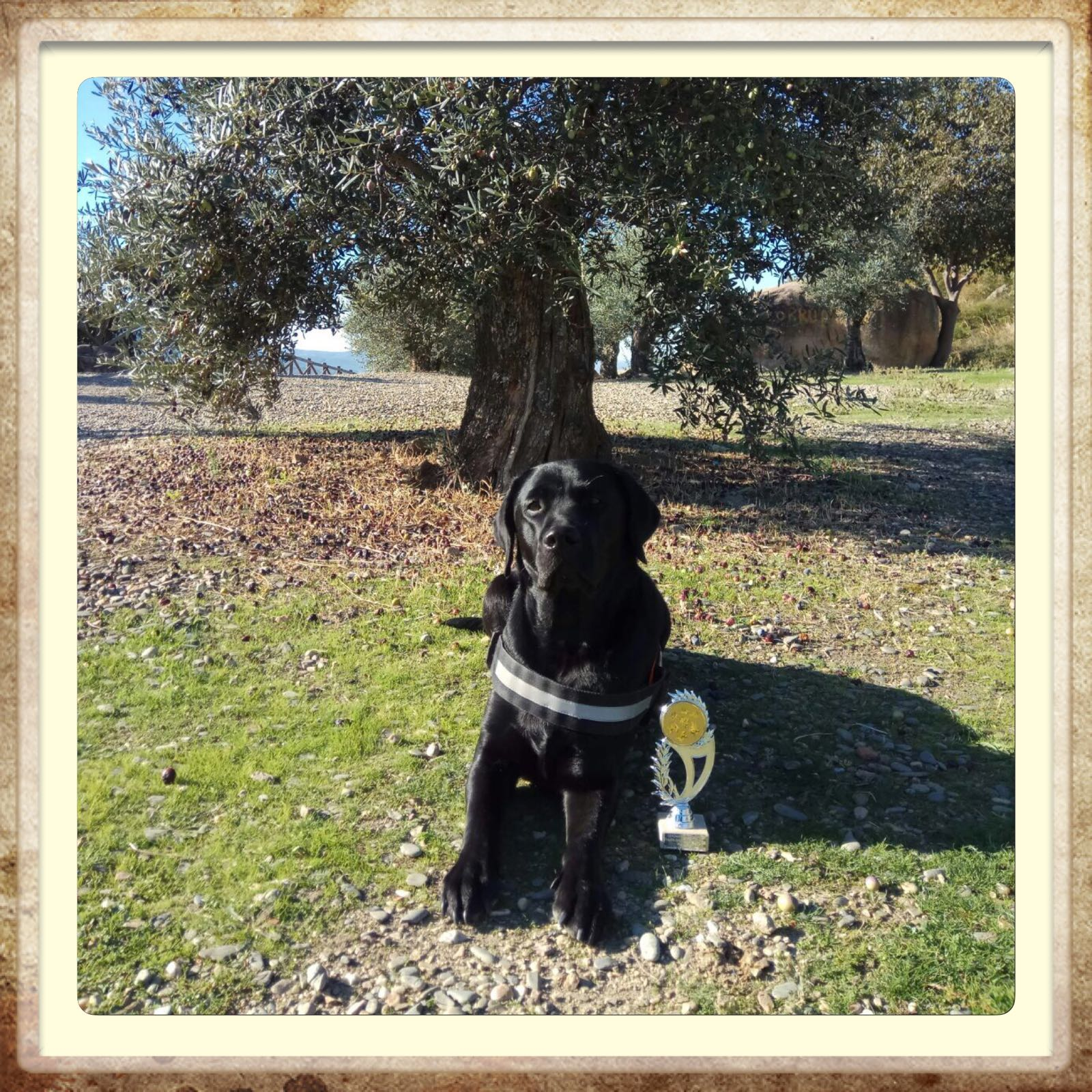 criadero labrador campeón retriever en Aragón